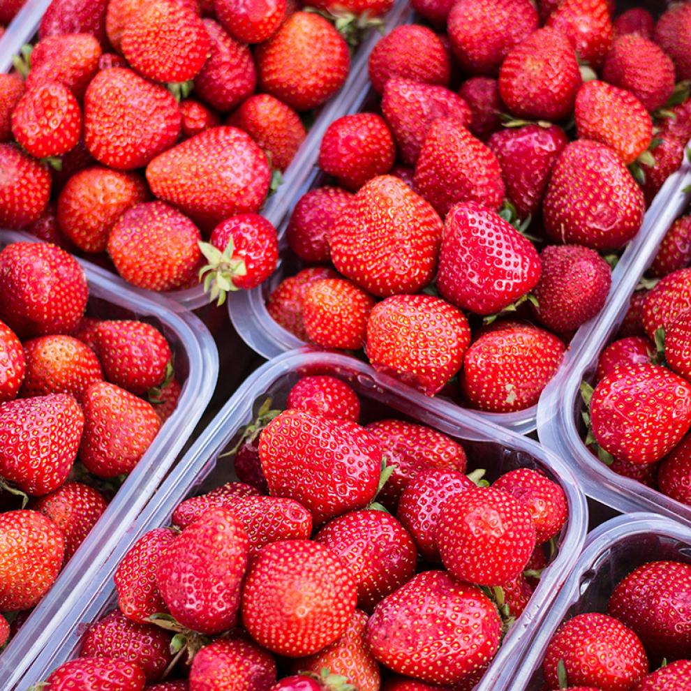 У спелых ягод минимальная «белая зона»