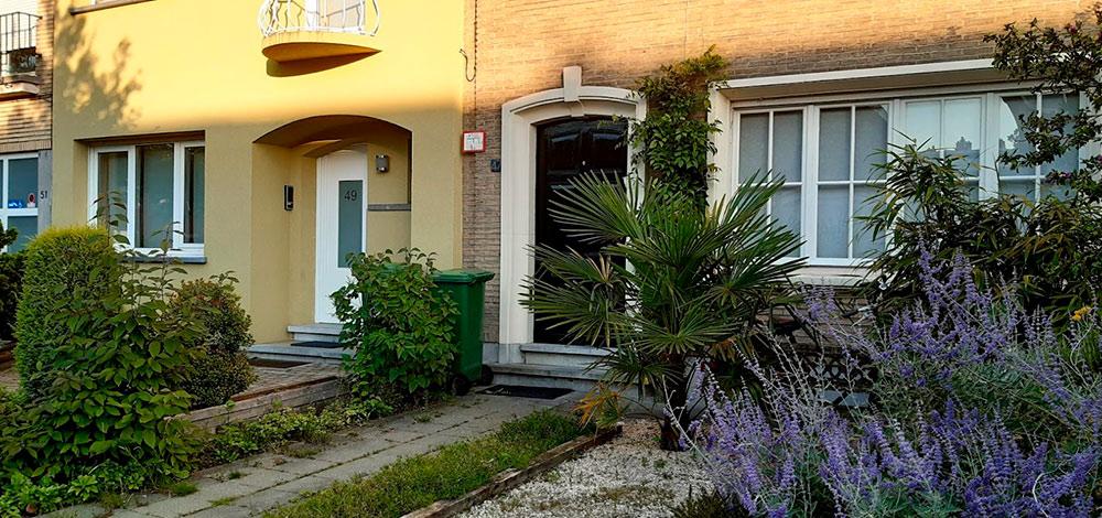 Маленькая пальма удома насоседней улице