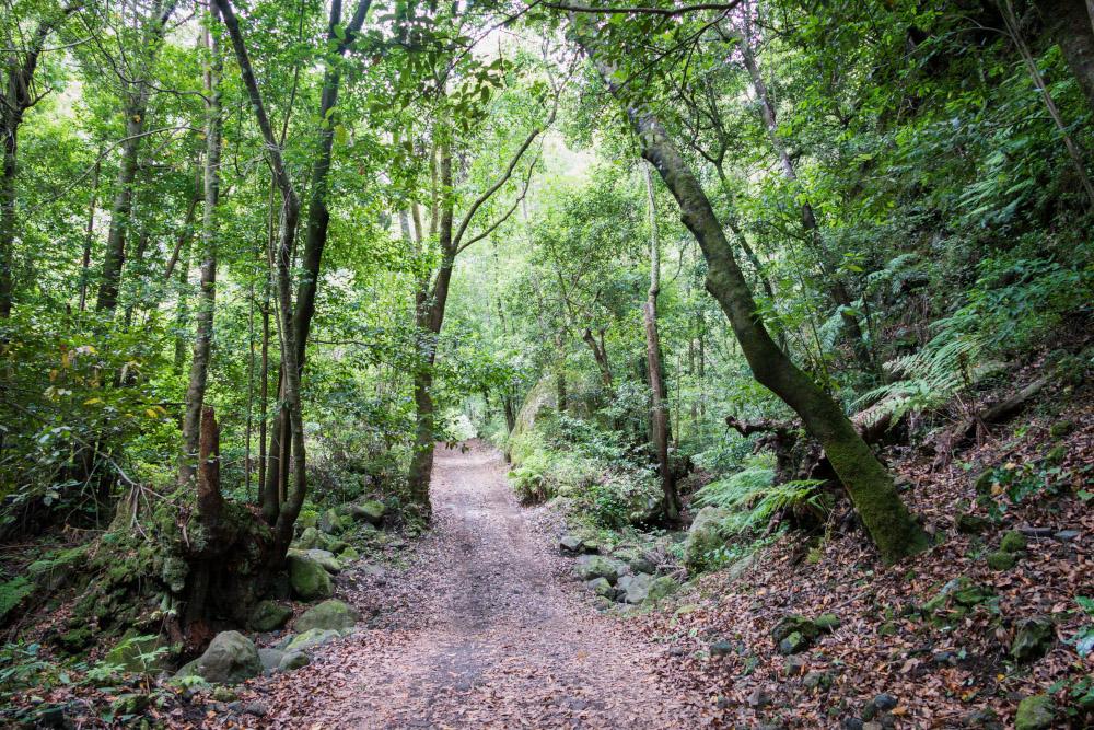 По лесу проложены удобные пешеходные тропы