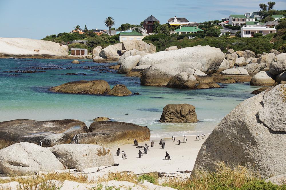 Пляж, облюбованный пингвинами. Это городок Саймонстаун, расположенный рядом с Кейптауном. Многих туристов влечет в ЮАР неповторимая природа и дикий животный мир
