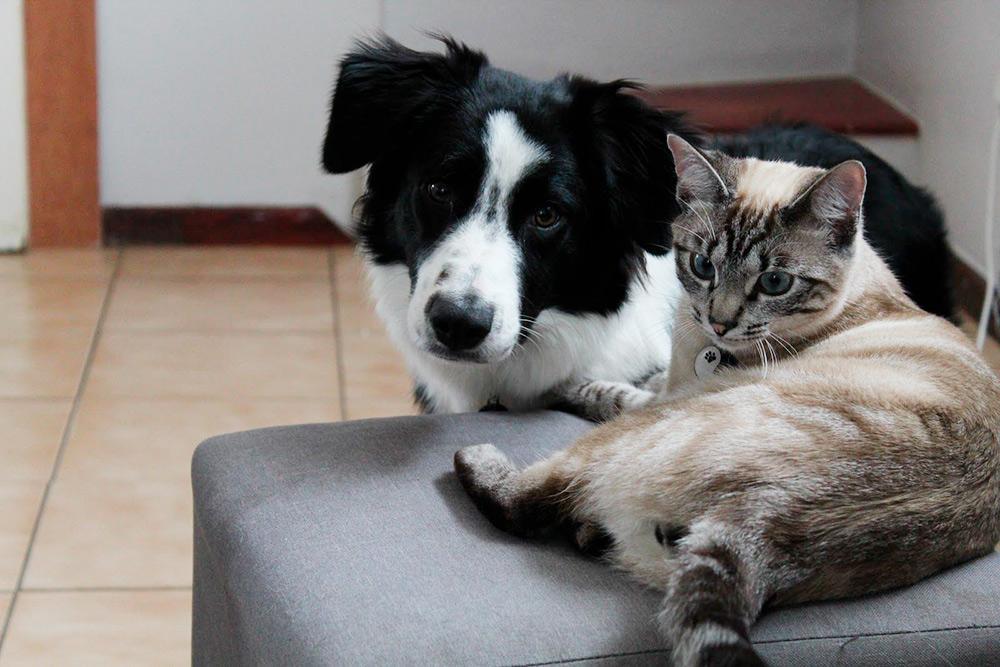 Это наша собака Лила и кот Фрай