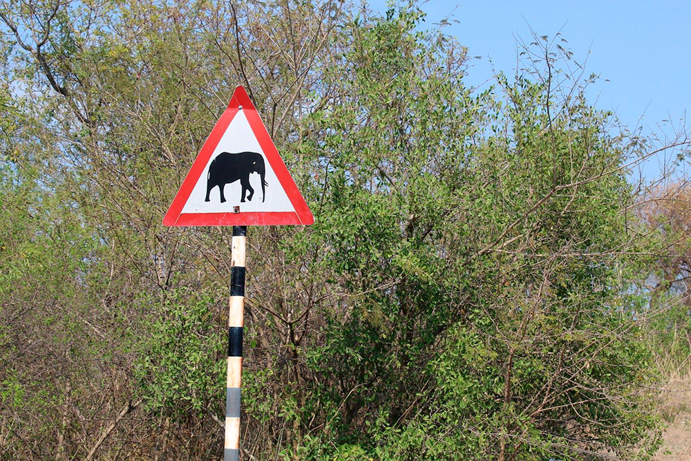 Но на местных дорогах нужно быть очень внимательным: вам наперерез всегда могут выскочить дикие животные — например антилопы. Есть места, где можно встретить и слона
