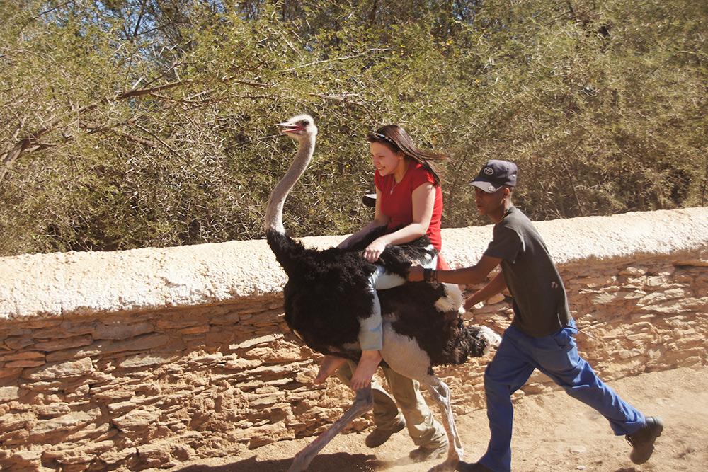 А это я пробую оседлать страуса на ферме в городе Оудсхурн