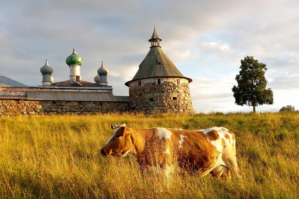 Дешевле всего добираться до Соловков по морю, но навигация открыта только с июня по октябрь