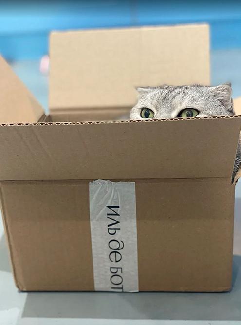 Наша кошка любит коробки