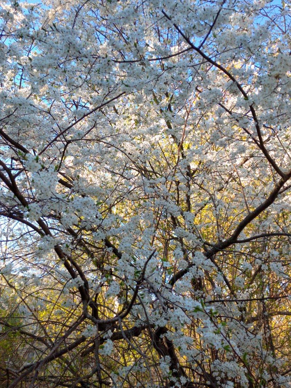 Мне очень нравятся эти деревья и их аромат. Правда, я постоянно путаю, как они называются