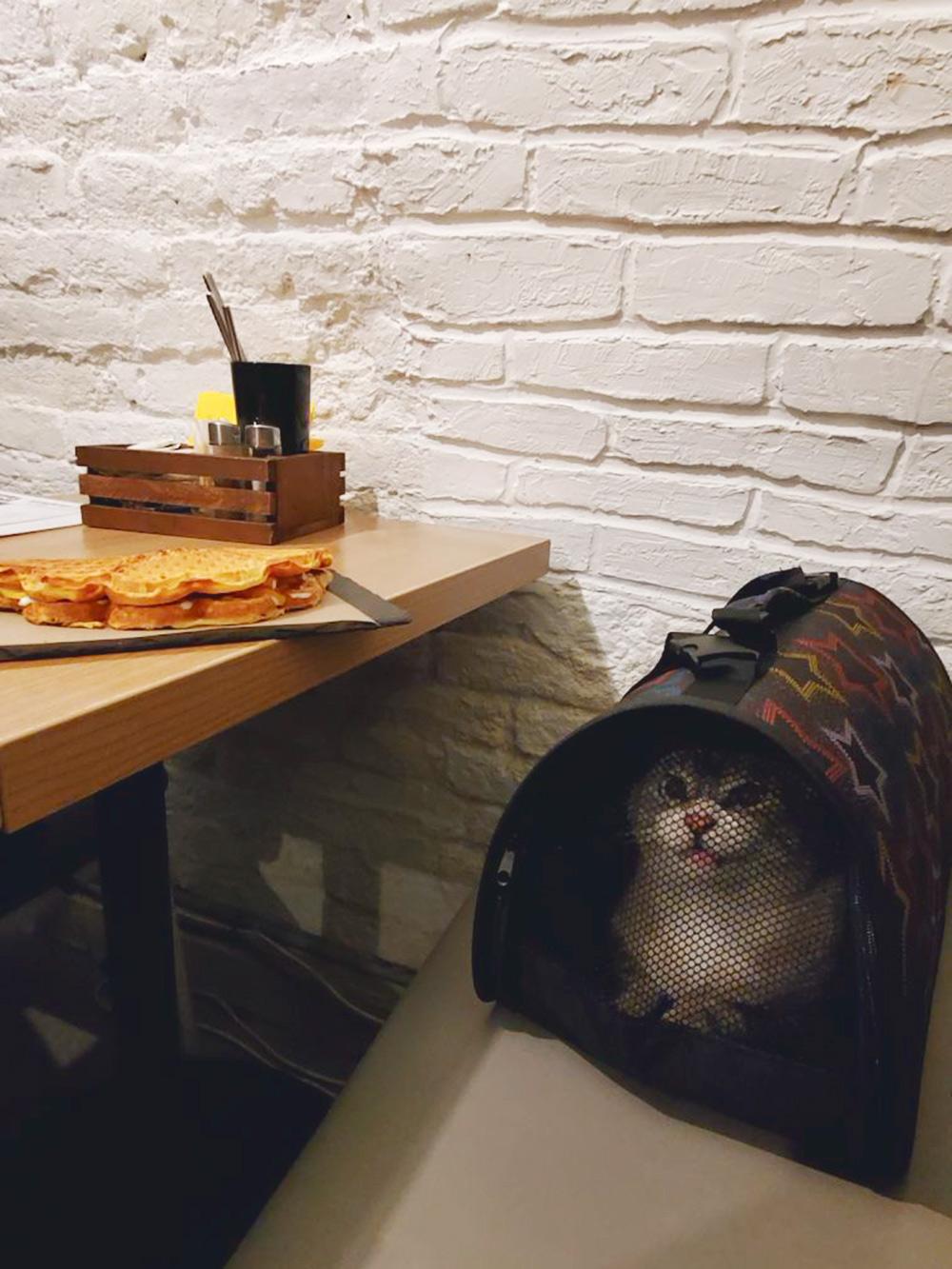 Кот тоже со мной