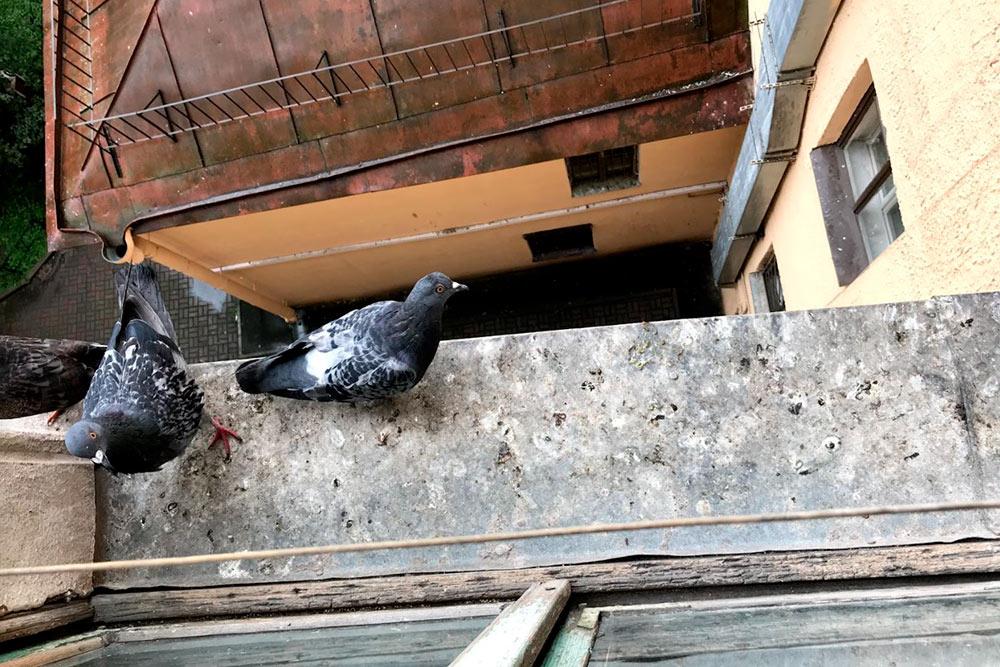 Голуби ходят по краю подоконника. Моя соседка Марина их кормит, поэтому они прилетают, как только видят, что кто-то есть на кухне