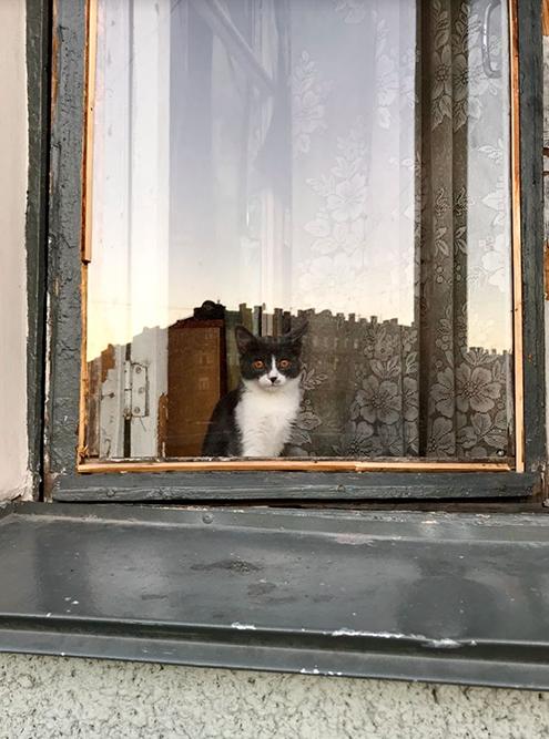 Это котик в окне по дороге домой. Я его часто вижу