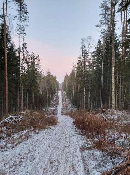 Частично видно спиленные деревца