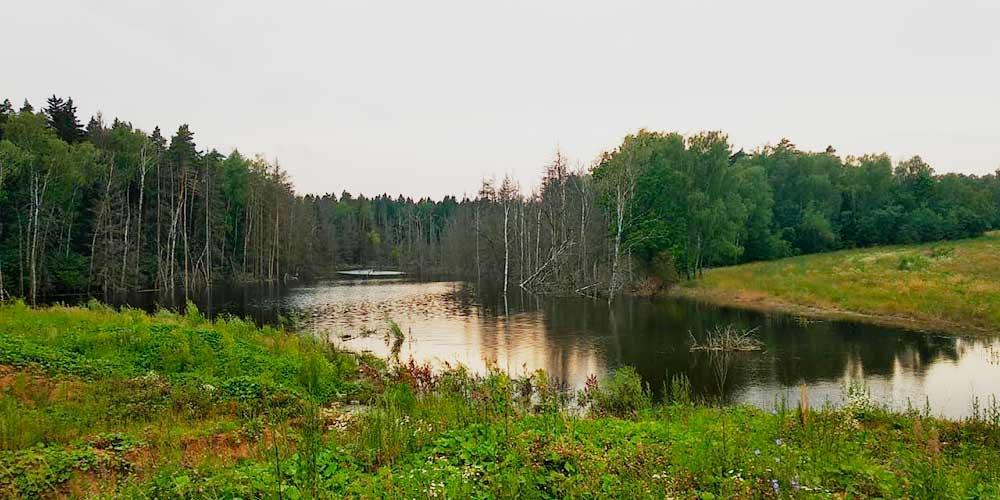 Красивое озеро с цаплями в 40 минутах от моего дома