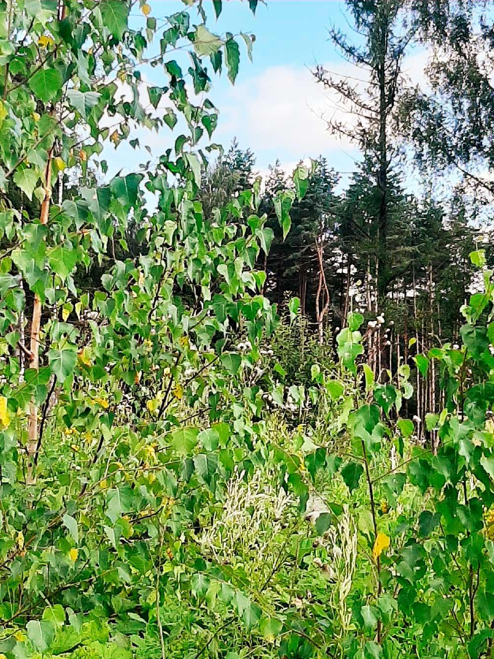 Это уютный лесок недалеко от нашего дома