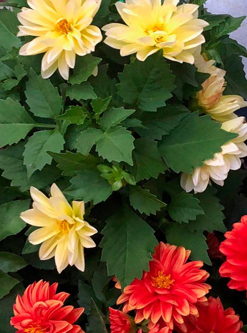 Цветы у нас в саду