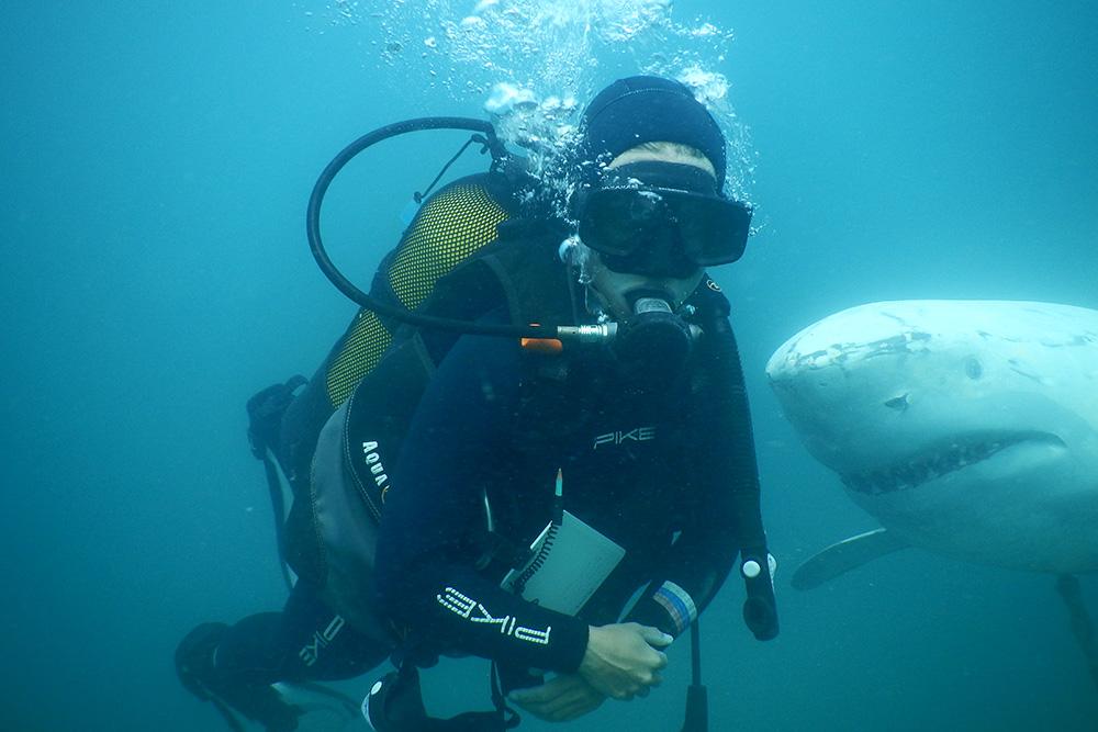 Акула ненастоящая. Это подводный музей для клиентов, которые погружаются с берега