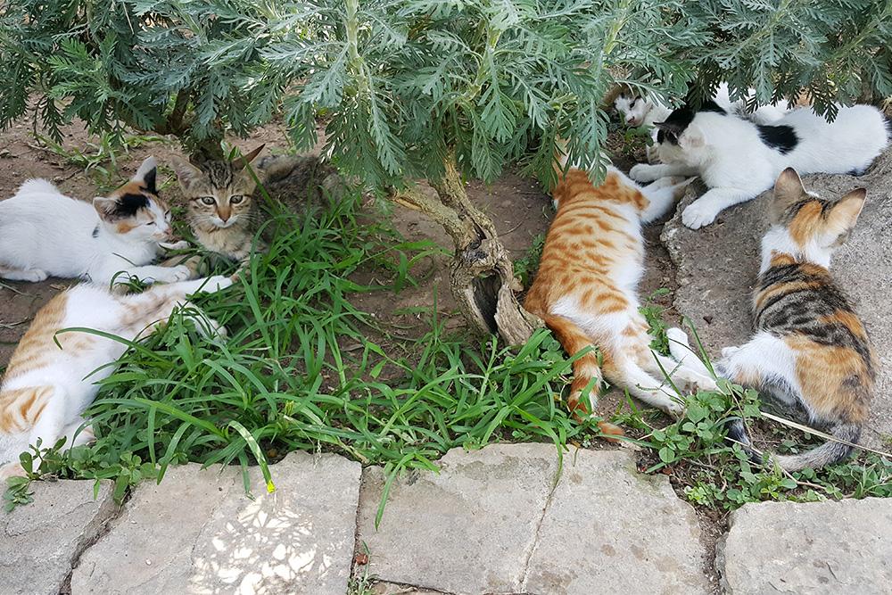 Турция — страна кошек. В скверах около набережной для них устроены домики. За кошками ухаживают сотрудники социальной службы
