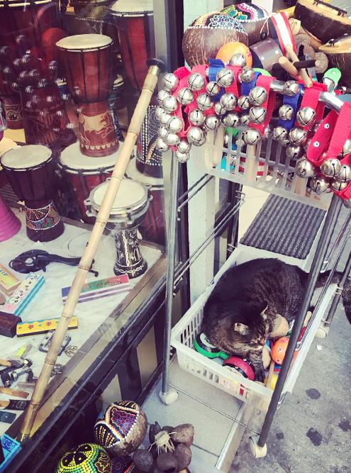 И даже музыкальные магазины не обходятся без кошек. В Турции они повсюду