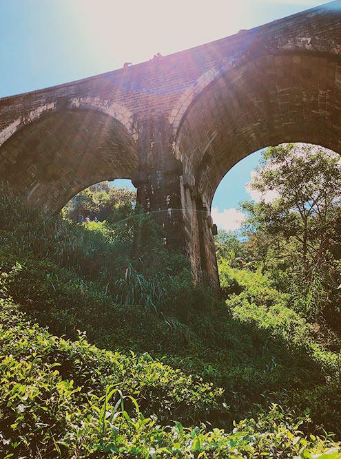 У подножья моста растет чай. Спускаясь туда, будьте осторожны: в кустах много пиявок, которые активно присасываются в пасмурные дни