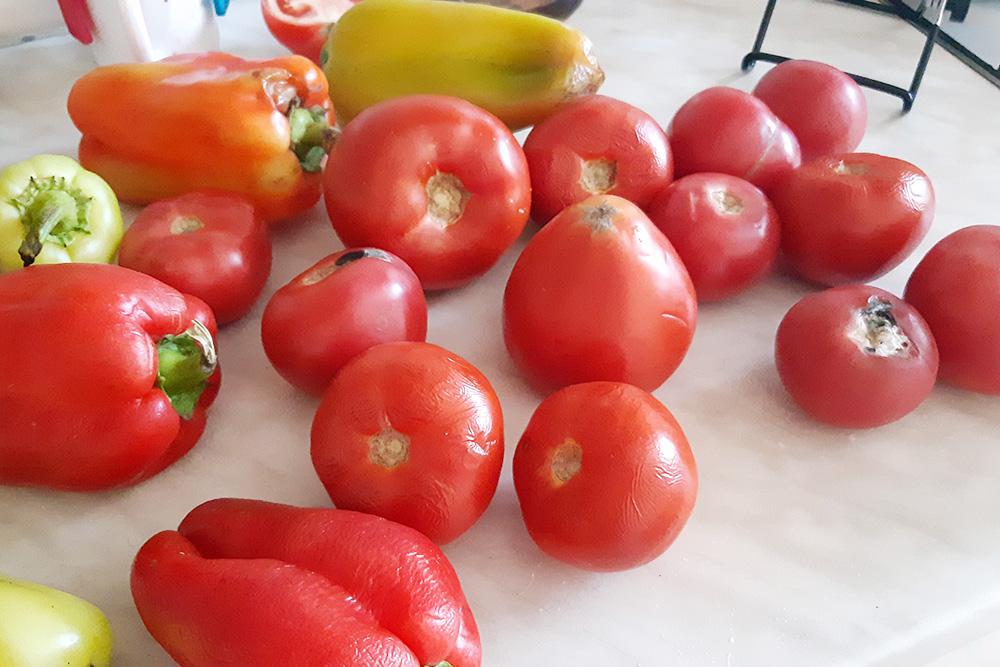 Улов в один из дней эксперимента. Все эти овощи достались мне совершенно бесплатно. Ниже я расскажу, как повторить мой опыт