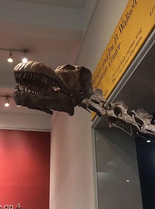 Скелет динозавра в Музее естественной истории