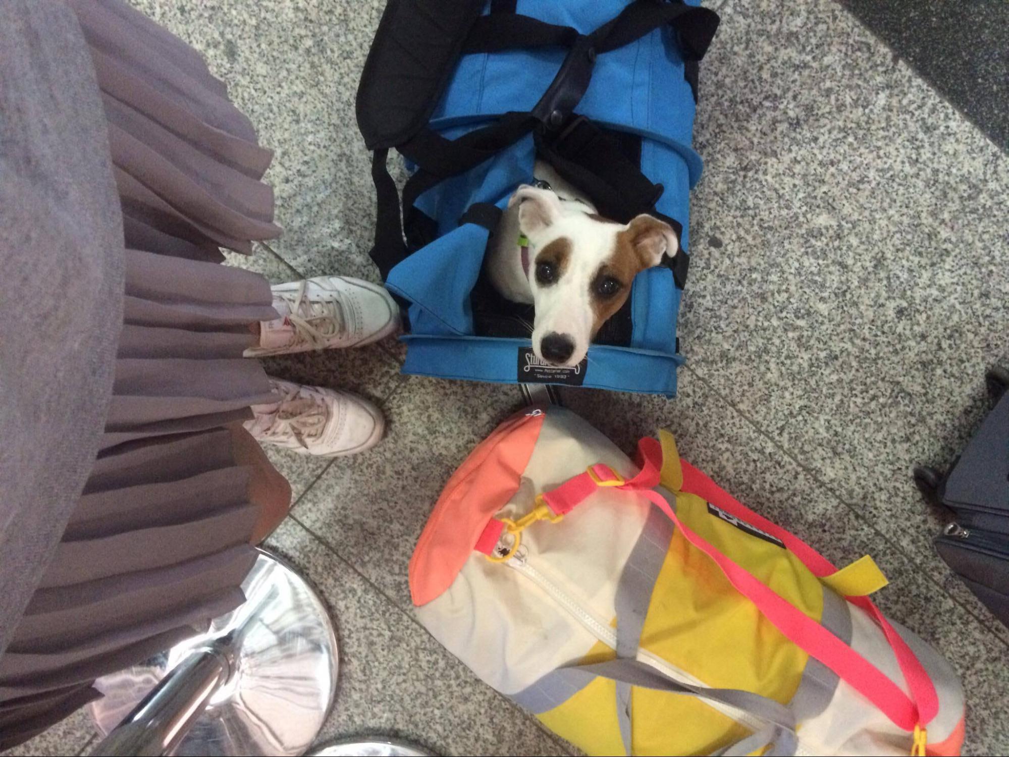 Собака Глаша в аэропорту