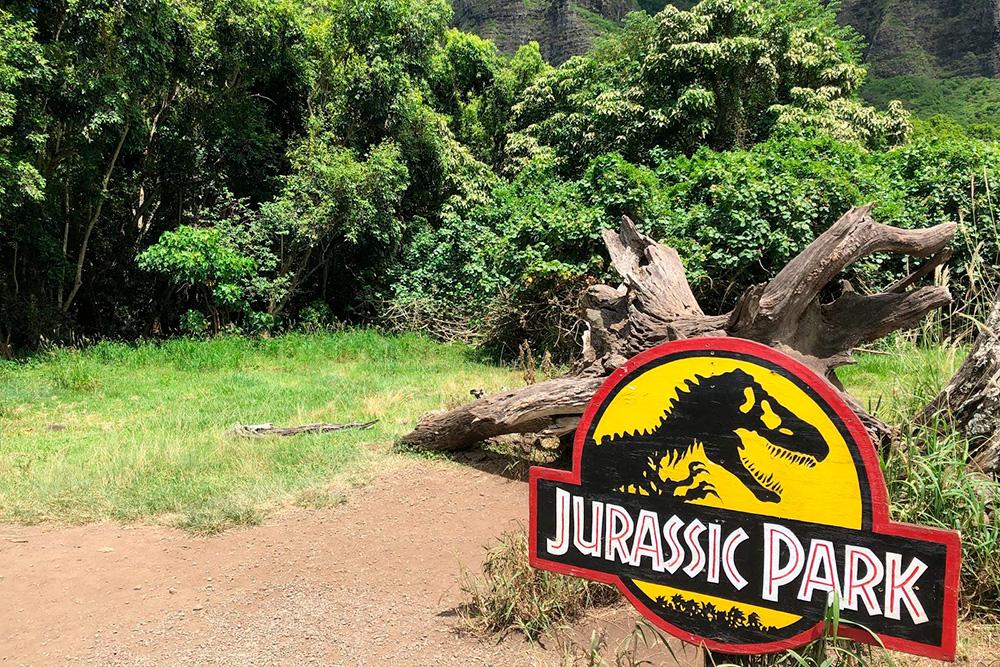 То самое сухое дерево, подкоторым прятался доктор Алан Грант и внуки профессора Хаммонда вфильме «Парк юрского периода». Тираннозавр выскакивал как раз излеса застволом