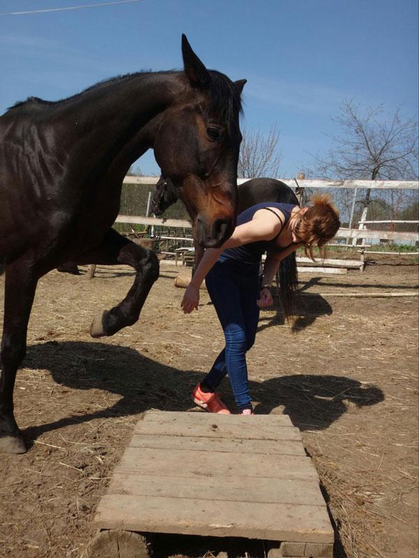 Работаю с лошадью в руках и прошу ее поставить ногу на возвышение