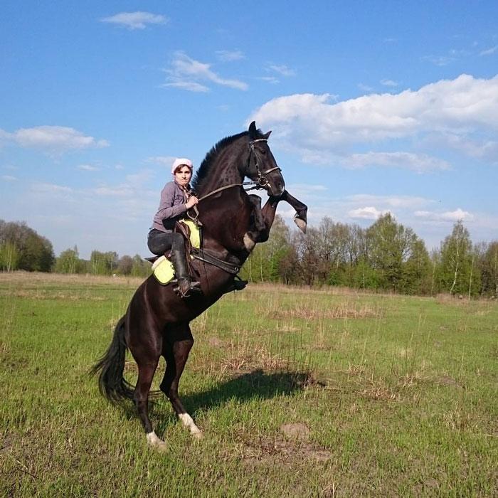 На этой фотографии вся лошадиная мощь. Они не пружинят, чтобы встать на свечку, и не подпрыгивают. Они просто поднимают свой вес. Лошадь намного сильнее человека, и не стоит пытаться ее перебороть
