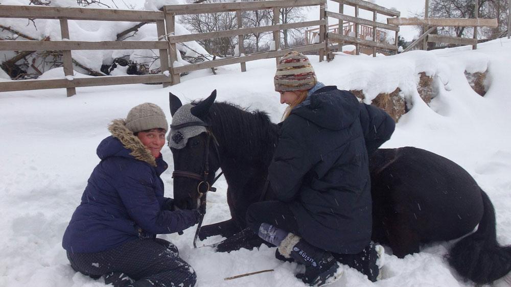 Лучшая награда для лошади — свобода. После тренировки, если учили новые элементы или прыгали и лошадь все делала хорошо, тренер говорит мне слезть, идти домой пешком и вести лошадь в поводу. Это километра два или больше, но так мы хвалим лошадь. А на этой фотографии мы учили Кассандру ложиться по команде. Она наконец легла, мы рады и хвалим ее, чтобы она запомнила положительное подкрепление и дальше любила делать это упражнение
