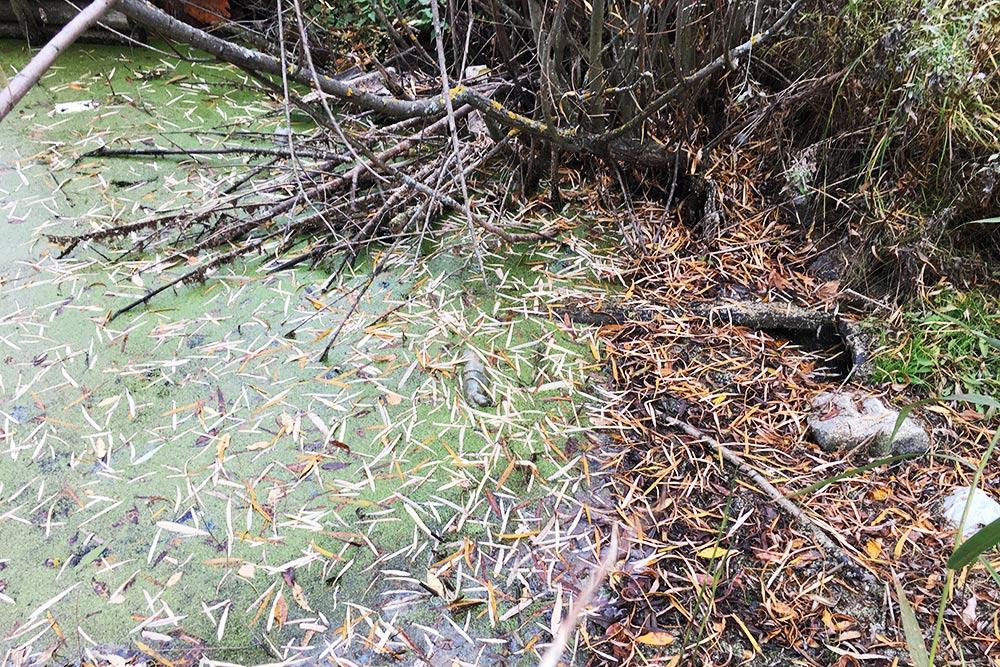 Вот такое происходило по весне: вода в канаве поднималась и затапливала часть нашего участка и кучу соседних. Сейчас усилиями всех заинтересованных садоводов канаву прочистили, наш участок больше не утопает