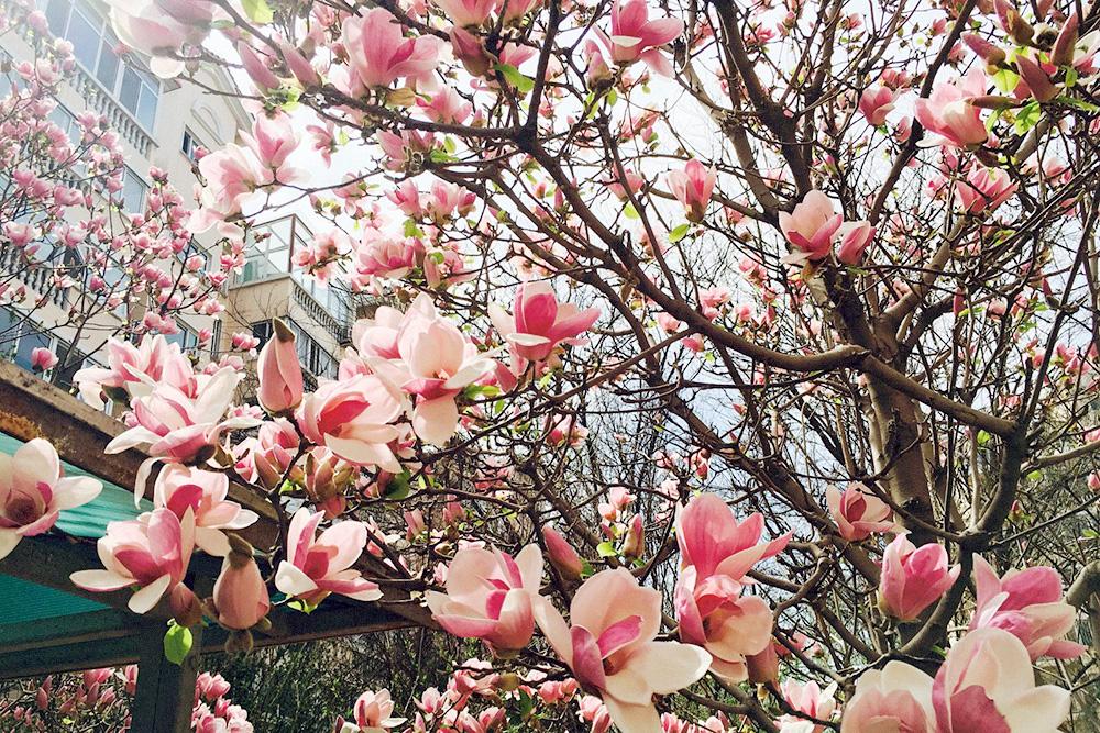 Зато весной и летом тут все цветет. Чтобы увидеть такую красоту, достаточно просто выйти на улицу
