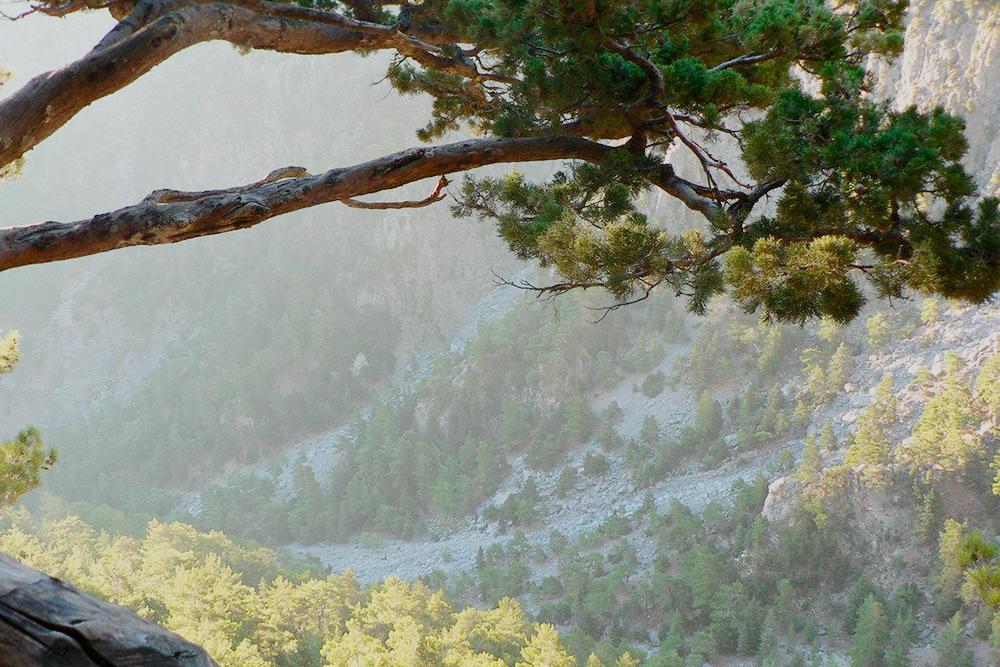 Ущелье Самарья находится в заповеднике Лефка-Ори. На его территории 450видов растений, 70 из них растут только на острове