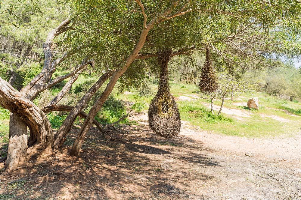 Это птичье гнездо из веток. Такие же гнезда, только меньших размеров, строят птички из Латинской Америки. Когда ребята собирали ветки для арт-объекта, они действовали точь-в-точь как эти птички. Фото: Edoardo Montaccini