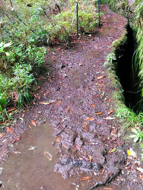 Дорога вдоль левады намокла и размылась, но погодных ограничений для посещения левады нет