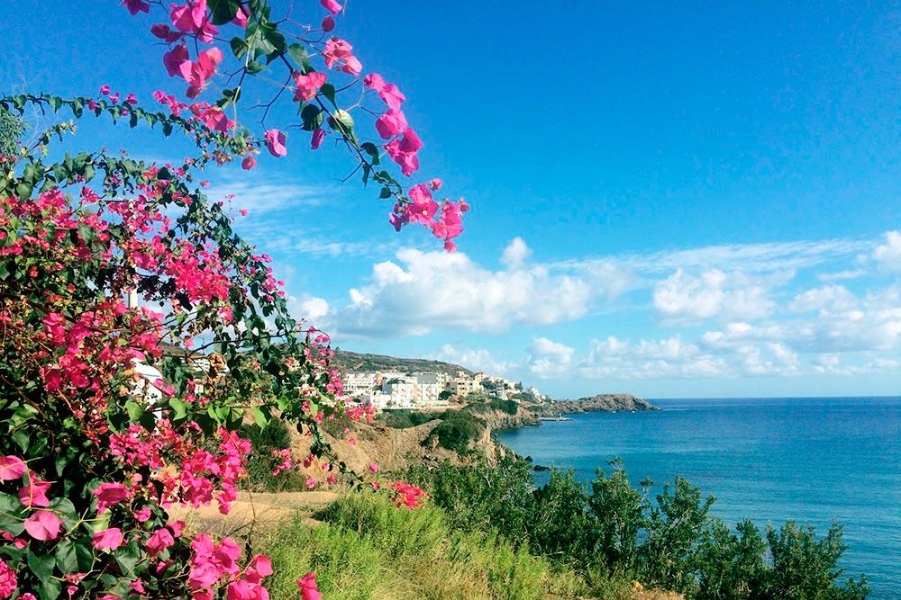 В конце лета и осенью цветет самый яркий цветок острова — розовая бугенвиллия