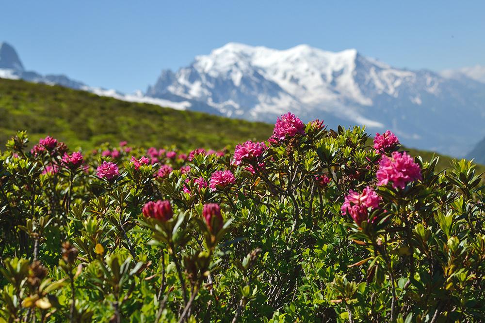 Первое восхождение на самую высокую вершину Альп произошло 8 августа 1786 года. Именно 8 августа отмечается международный день альпинизма