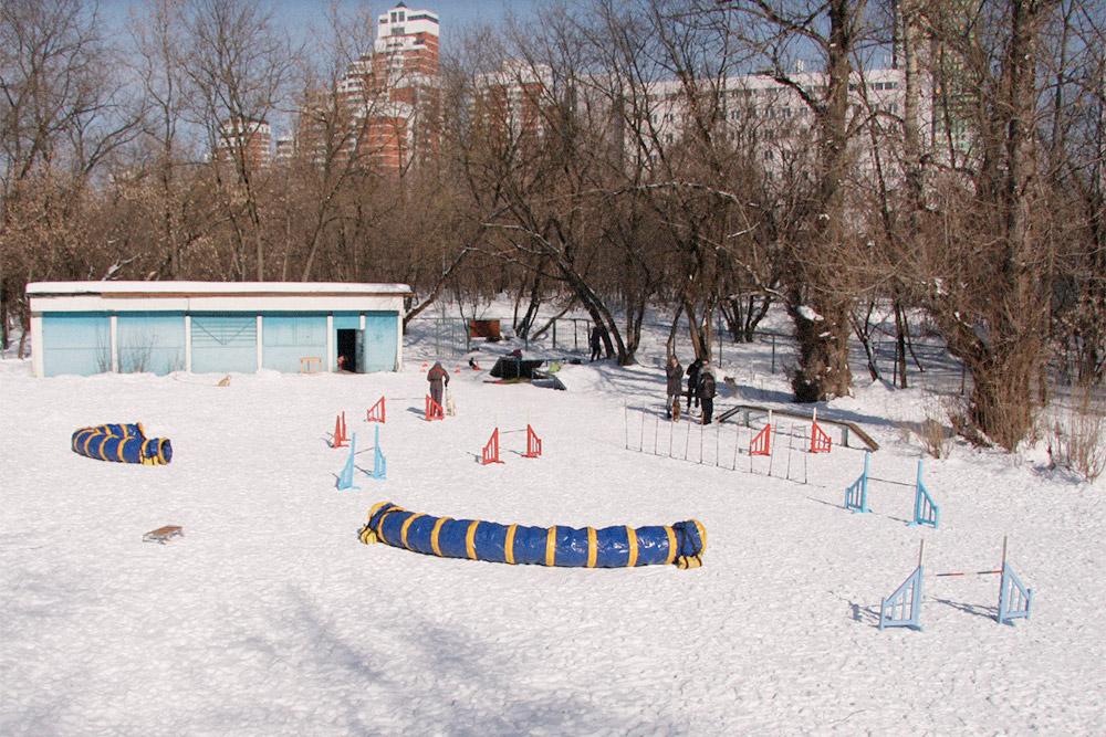 Так выглядит площадка для аджилити зимой