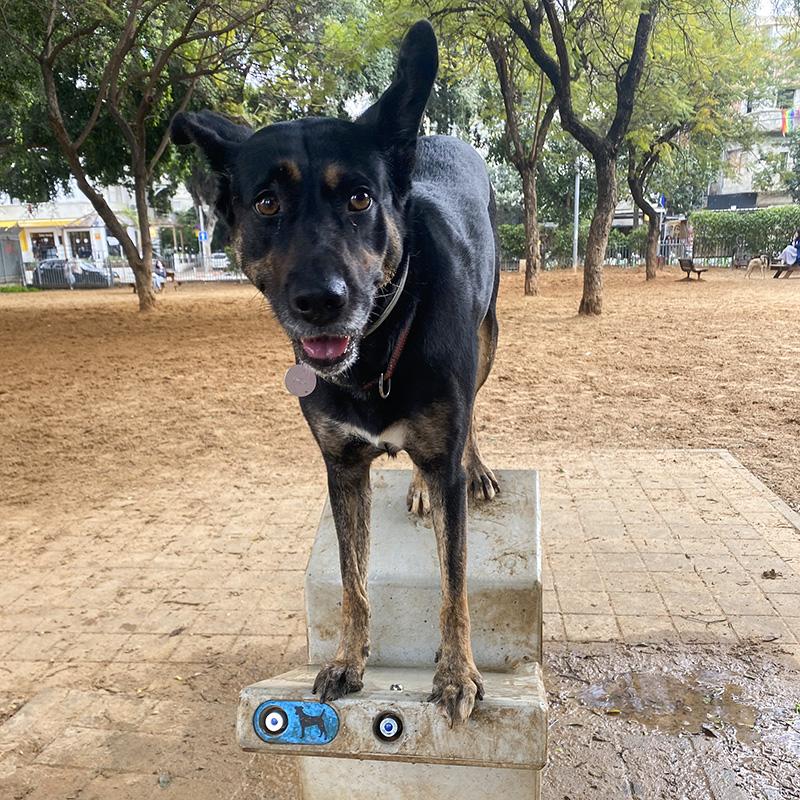 В собачьих парках фонтанчики спроектированы так, чтобы было удобно поить питомца