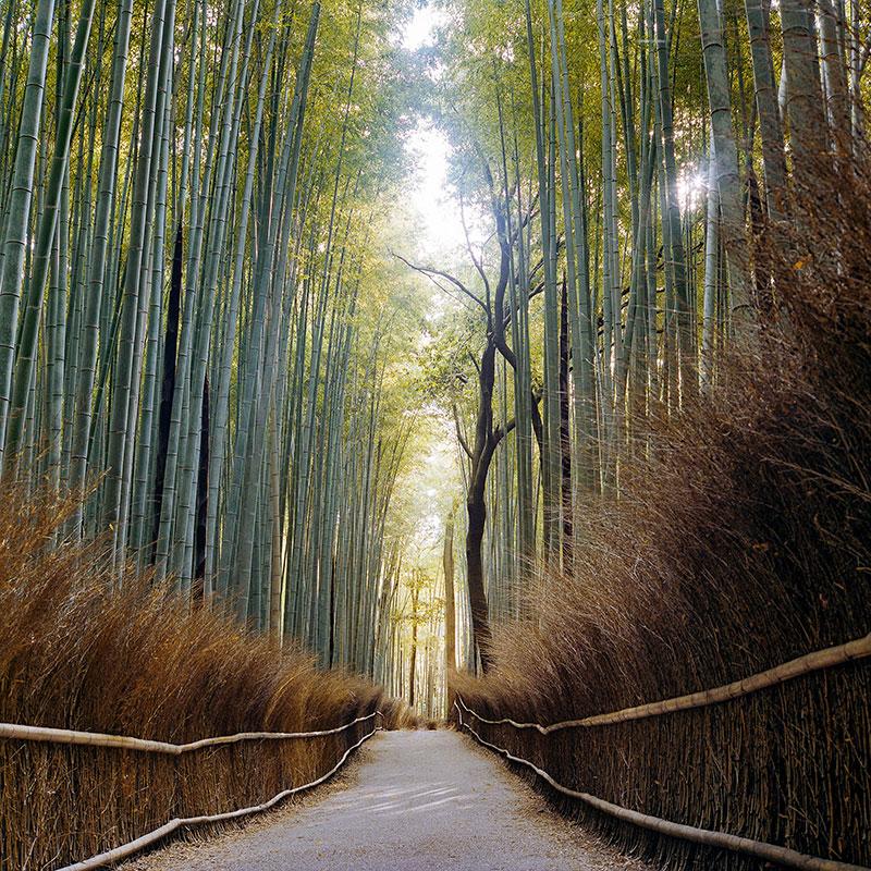 Бамбуковая роща в Арашияме, Киото. Днем в этом кадре былобы несколько десятков туристов, поэтому единственный способ увидеть это место безлюдей — приехать сразу после рассвета