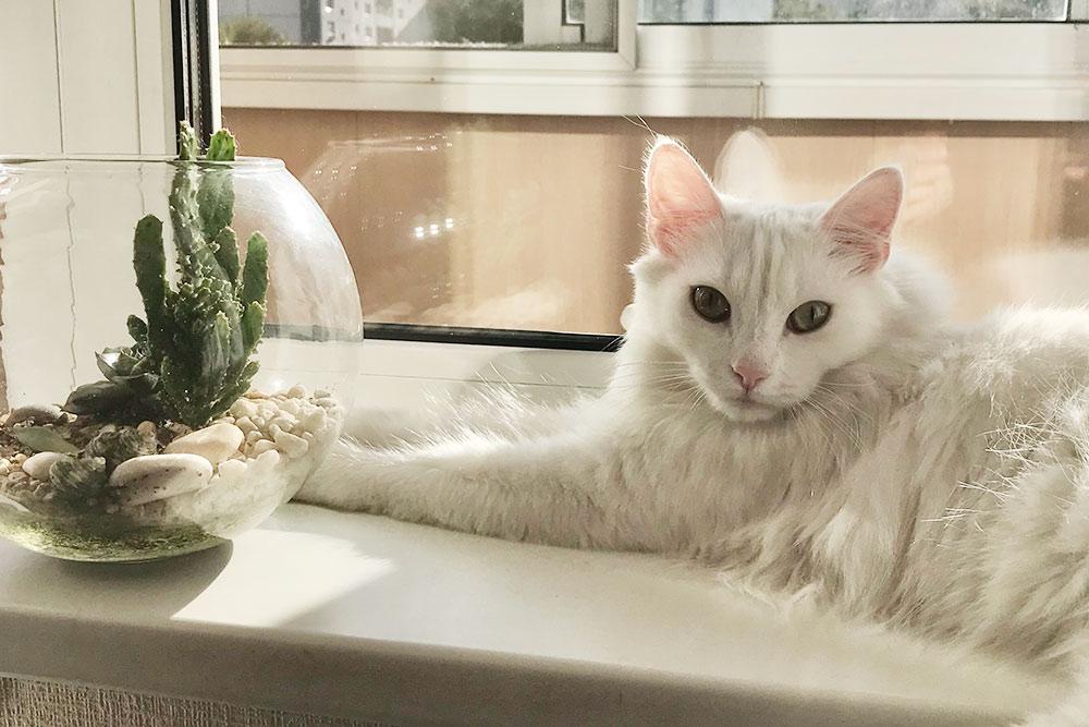 Это Ройс, онлюбит проводить время навсем белом — подоконнике, ванне, футболке