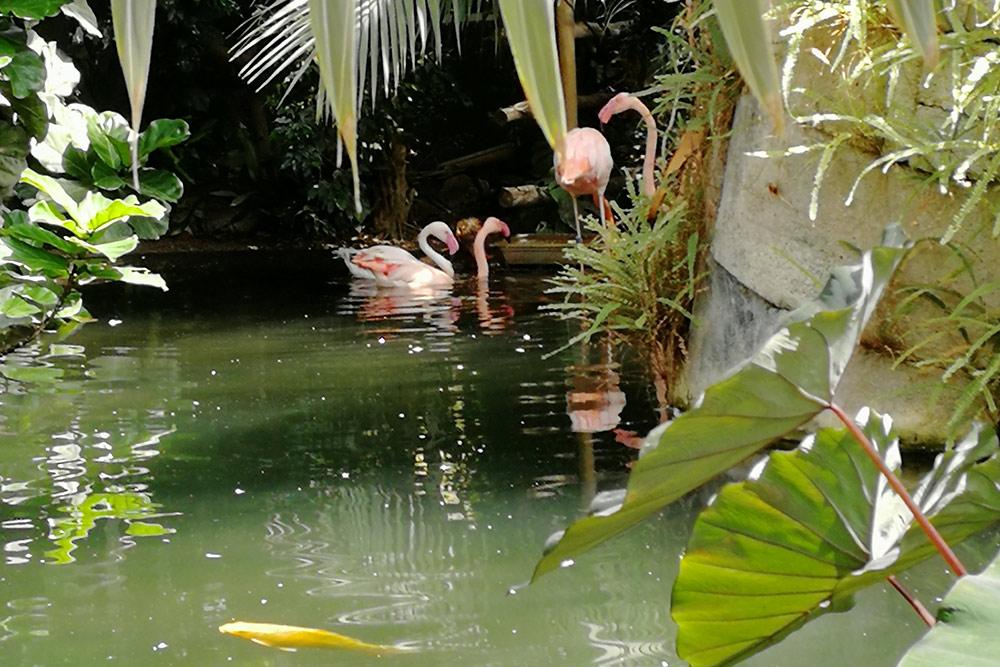 Фламинго и черные лебеди — самые интересные обитатели парка