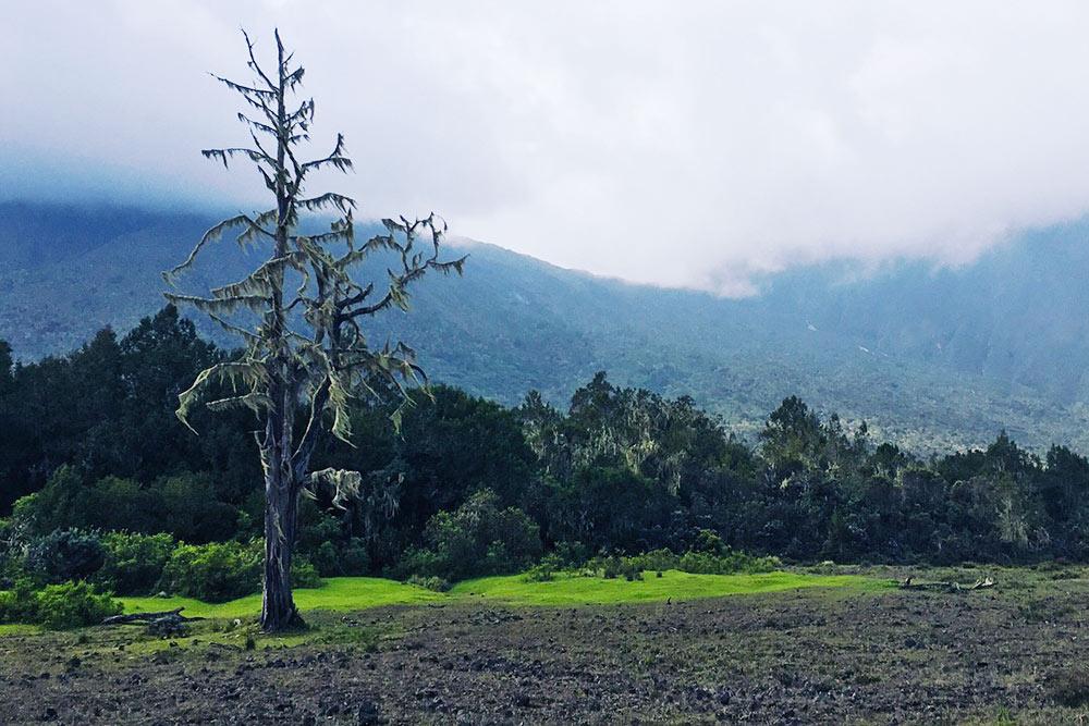 Вот такие пейзажи, каквкино, явидела своими глазами внациональном парке Аруша, недалеко откоторого жила