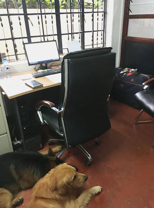 Мой офис иместные собаки