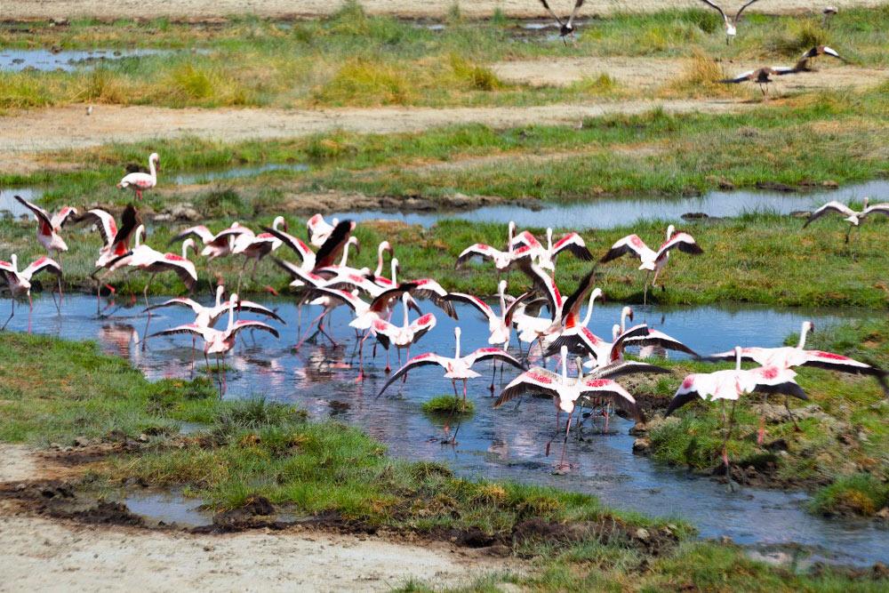 Фламинго вТарангире. Издалека озера выглядят полностью розовыми