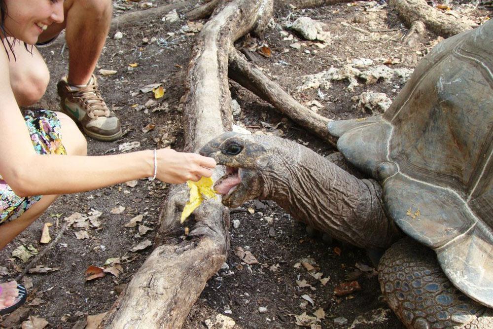 Напротив Стоун-тауна располагается остров Призон — Тюремный остров. Насамом деле заключенных наострове никогда недержали, аиспользовали егокаккарантинную станцию. Если наприбывающем впорт корабле были больные, например желтой лихорадкой, ихоставляли наострове накарантин. Сейчас тамстарый форт имузей, авсаду можно встретить огромных черепах