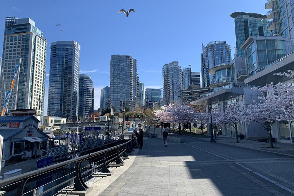 Центр города типичен длямегаполисов Северной Америки: онплотно застроен жилыми иофисными небоскребами. Нонесмотря наэто, тамочень уютно. Например, весной вдоль набережной расцветает сакура