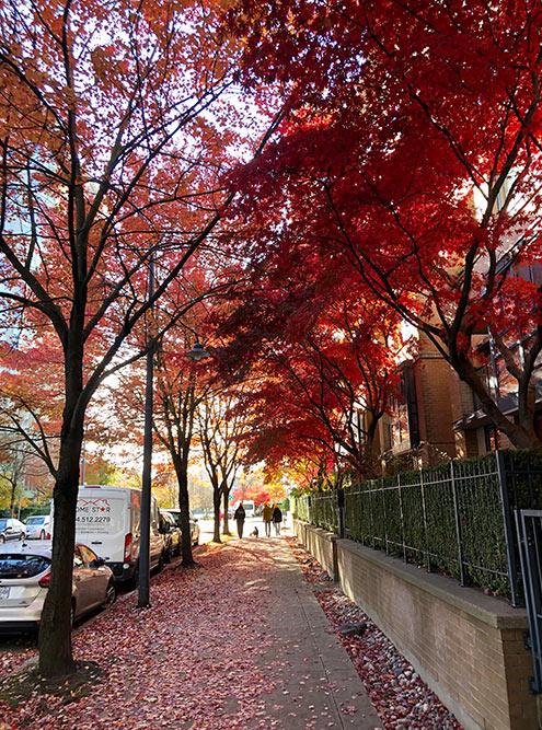 А чтобы увидеть знаменитые канадские клены во всей их осенней красе, нужно приезжать в Ванкувер в начале октября