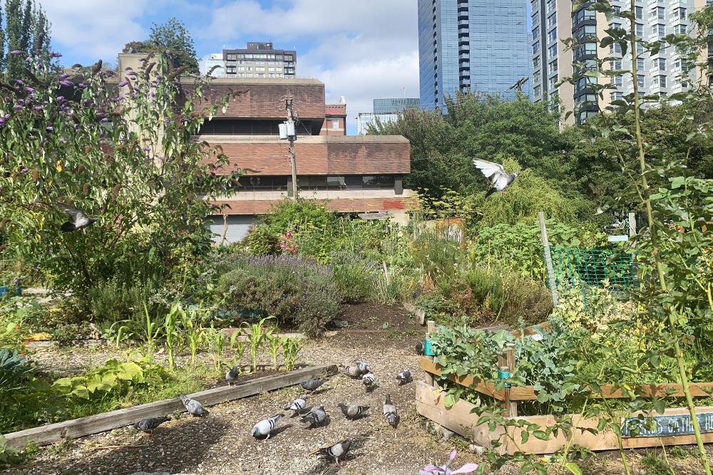 Каждый участник общественного сада получает кусочек земли, накотором может что-то вырастить