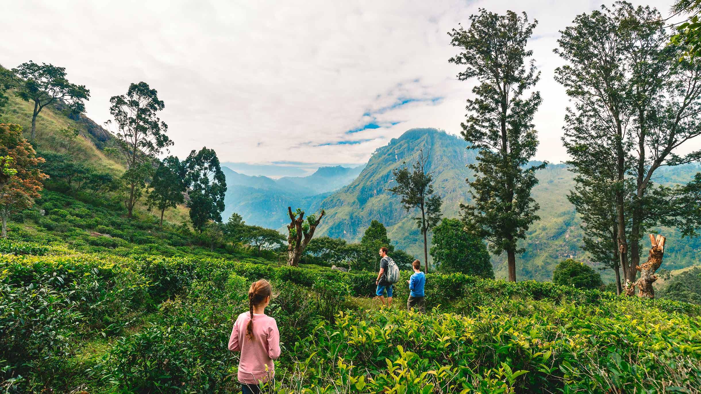 Шри-Ланка открылась длятуристов: объясняем правила въезда