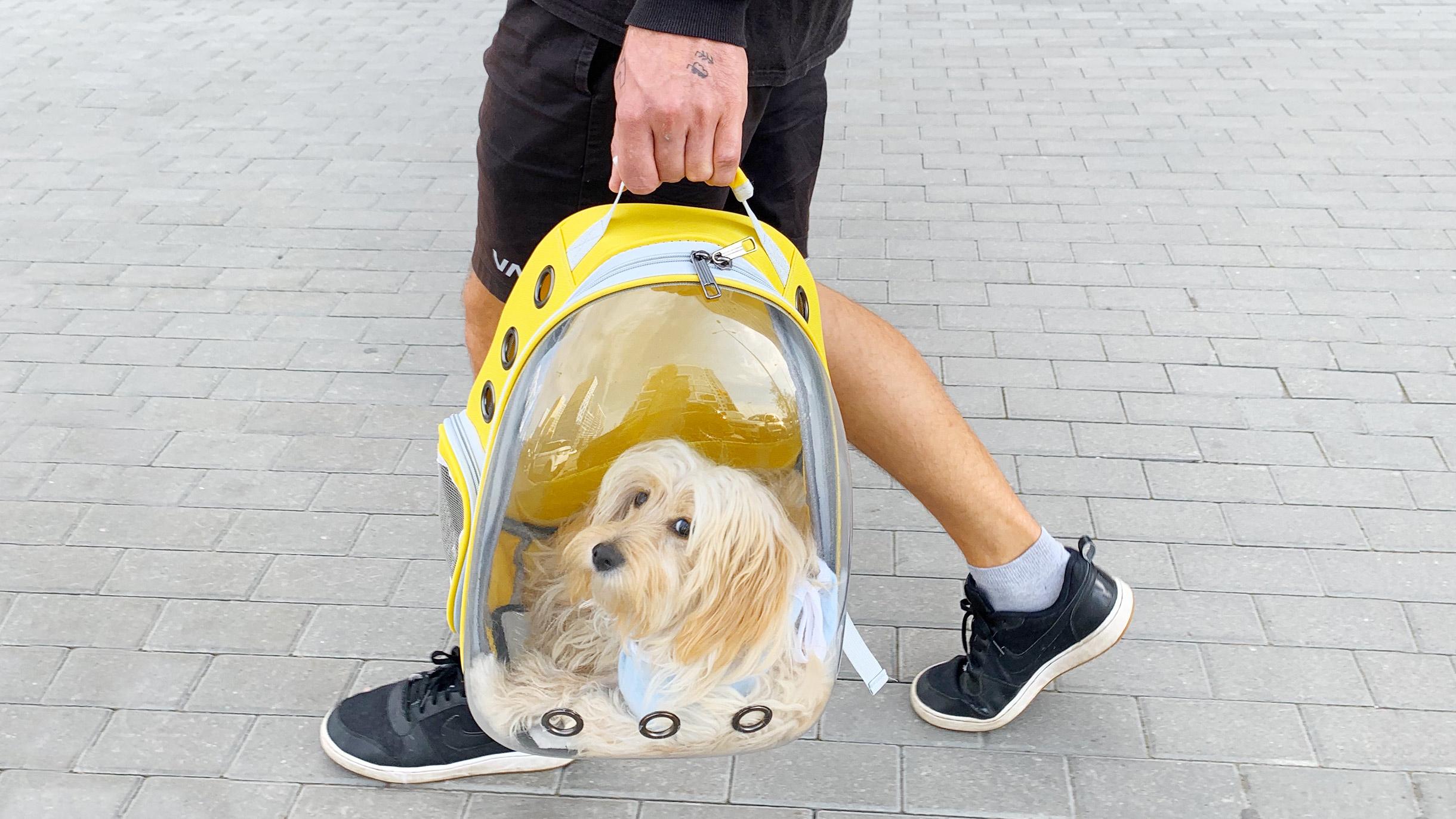 Как путешествовать с собакой по России