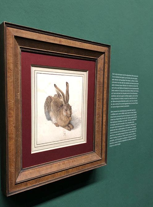 «Заяц» Дюрера написан такдетально, чтокажется, егоможно спугнуть ионускачет скартины